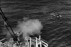鯨・遠洋捕鯨
